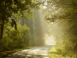 Header image of a sunlight road in the trees from sales coach mindset lessons
